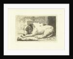 Sleeping dog by Johannes van Cuylenburgh