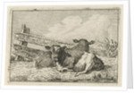 Two calves lying by a fence by Anthony Oberman