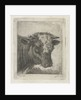 Head of a cow by Jacobus Cornelis Gaal