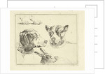 Study Sheet with two dog heads, paws dog and head of hare by Jan Dasveldt