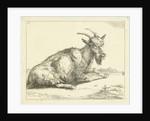 Goat by Jan Dasveldt