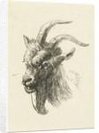 Head of a buck by Jan Dasveldt
