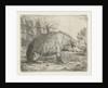 Sitting wild boar by Jacobus Cornelis Gaal