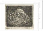 Head of a ram with twisted horns backward by Pieter Gaal