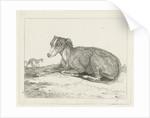 Greyhounds by Jan Dasveldt