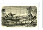 Bois De Boulogne Paris 19th Century by Anonymous