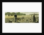Canada Wheat Harvest in New Land 1880 by Anonymous
