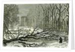 Kensington Gardens London 1887 Trees Blown in Broad Walk by Anonymous