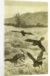 Hunt Fox Austria 1891 by Anonymous