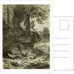 Hunting Austria 1891 by Anonymous