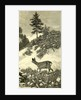 Austria Deer 1891 by Anonymous