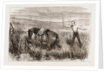 A Trooper's Horse In Foxton Mire, Autumn Manoeuvers 1873 by Anonymous