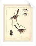 Birds-U.S.P.R.R. Exp. & Surveys, 35th Parallel by Anonymous