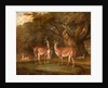Llamas and a fox in a wooded landscape Llamas in a park, with a fox and a magpie by Thomas Weaver