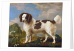 Brown and White Norfolk or Water Spaniel by George Stubbs