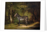 The First Zebra Seen in England by George Stubbs