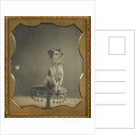 Dog sitting on a table by Anonymous