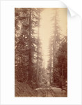 Big Tree Station, Santa Cruz by William Henry Jackson