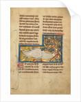 A Caladrius Bird by Anonymous