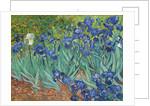 Irises by Vincent van Gogh