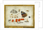 Butterfly, Caterpillar, Moth, Insects, and Currants by Jan van Kessel II