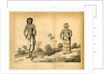 Shwe-Maong a native of Lao, Journal of an Embassy from the Governor General of India to the Court of Ava by Anonymous