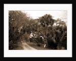 Near Bostrom's, Ormond, Jackson, Bostrom's (Ormond Beach, Fla.), Roads, United States, Florida, Ormond Beach, 1880 by William Henry