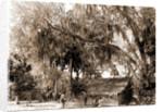 Orange pickers, Ormond, Fla, Jackson, Orange orchards, Harvesting, Thatched roofs, United States, Florida, Ormond Beach, 1880 by William Henry