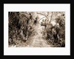 Ormond Hammock, The, Jackson, Roads, United States, Florida, Ormond Beach, 1880 by William Henry