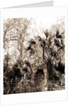 Chimneys, Ormond hammock, The, Jackson, Chimneys, Ruins, United States, Florida, Ormond Beach, 1880 by William Henry