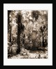 Chimneys, Ormond hammock, The, Jackson, Chimneys, Palms, Ruins, United States, Florida, Ormond Beach, 1880 by William Henry