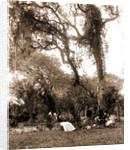 Garden near Daytona, A, Jackson, Gardens, United States, Florida, Daytona Beach, 1880 by William Henry