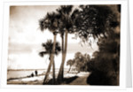 Indian River at Cocoa, Fla, Jackson, Palms, Waterfronts, Bays, United States, Florida, Indian River, United States, Florida, Cocoa, 1880 by William Henry