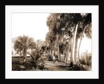 Hotel at Eden, Indian River, Jackson, Hotels, Bays, United States, Florida, Indian River, United States, Florida, Eden, 1880 by William Henry