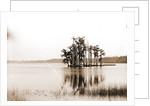 Lake Louise near Seville, Fla, Jackson, Islands, Lakes & ponds, United States, Florida, Louise, Lake, United States, Florida, Seville, 1880 by William Henry