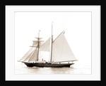 Golden Fleece, Satanella (Steam yacht), 1891 by Anonymous