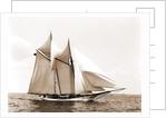 Fleur-de-lis (Yacht) by Anonymous
