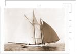 Alcaea (Schooner), 1892 by Anonymous
