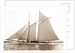 America (Schooner), 1891 by Anonymous