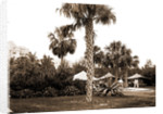Golf links, Hotel Royal Poinciana by Anonymous