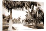 Colon Park, Havana by Anonymous