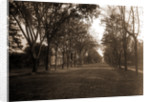 Elizabeth Street, Dansville by Anonymous