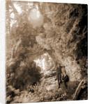 Fairy Arch, Mackinac Island by Anonymous