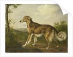 Siberian Greyhound by Jan Dasveldt