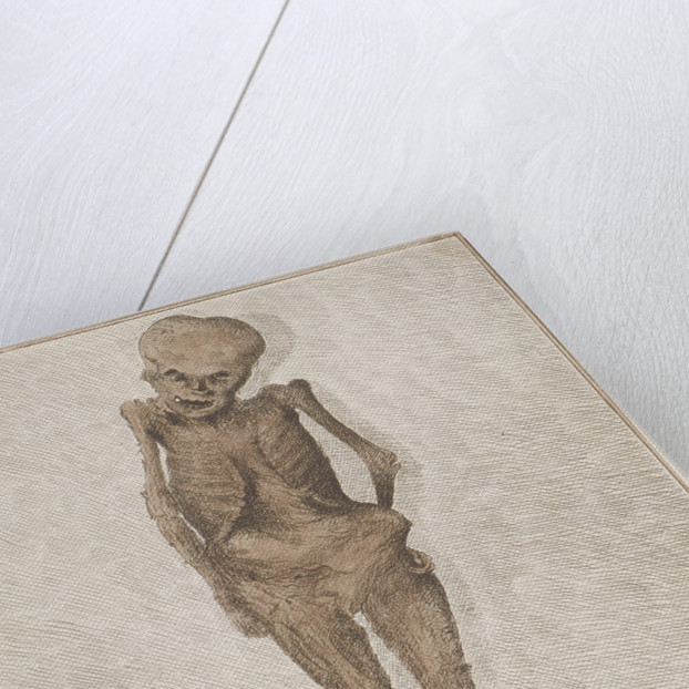 Skeleton of boy found in the vault at St Botolph, Aldgate, London by HA Rogers