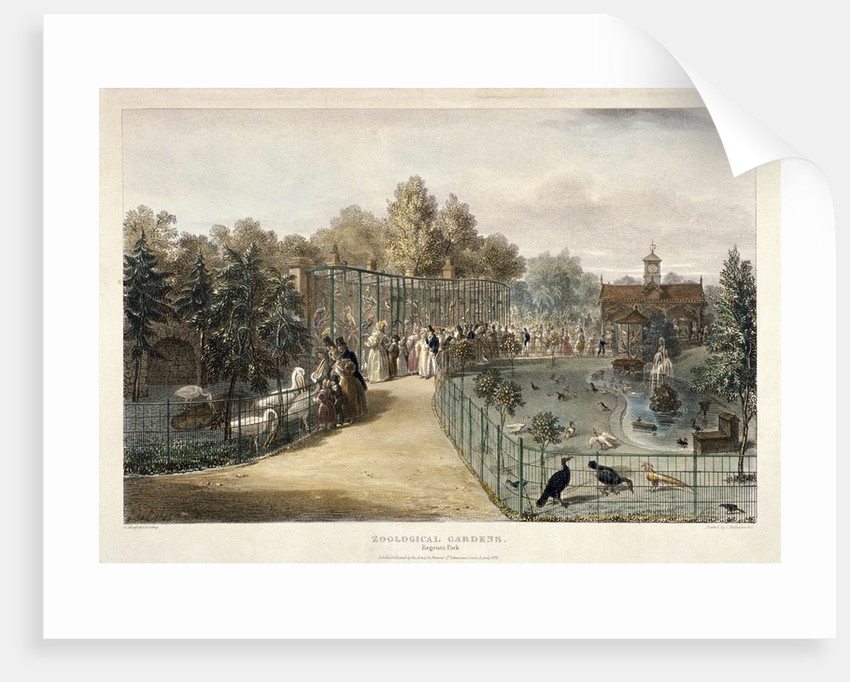 Zoological Gardens, Regent's Park, London by