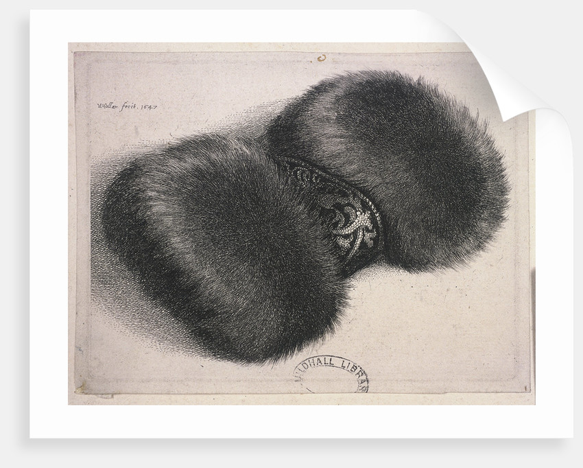 A large muff with a band of brocade by Wenceslaus Hollar