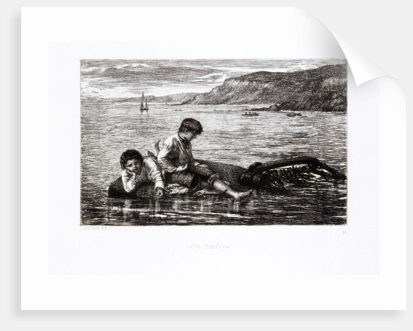 Sea Urchins by James Clarke Hook