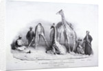 Giraffes at the Zoological Gardens, Regent's Park, Marylebone, London by George Scharf