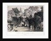 Zoological Gardens, Regent's Park, Marylebone, London by FW Hulme